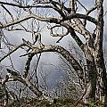 Lone Tree by Douglas Barnard