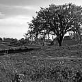 Lone Tree by LeeAnn McLaneGoetz McLaneGoetzStudioLLCcom