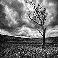 Lone Tree On The Ayrshire Moors by John Farnan
