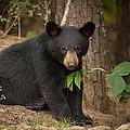 Lonely Bear by Joye Ardyn Durham