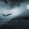Lonely Bird In Moonlight  by Jaroslaw Grudzinski