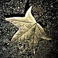Lonely Leaf by The Artist Project