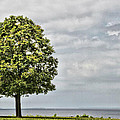Lonely Tree by Alice Gipson