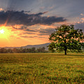 Lonely Tree In Field by Malcolm MacGregor
