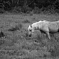 Lonesome Pony by Lori Tambakis
