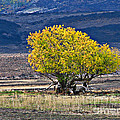 Lonesome by Robert Bales