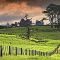 Long Bay Fields by Mark Meredith