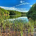 Long Branch Lake Marsh by Adam Jewell
