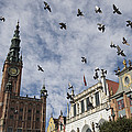 Long Market With Pigeons, Town Hall by Keenpress