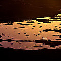 Long Reef Golden Pond by Tony Irving