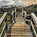 Long Stairway To Beach by Kaye Menner