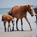 Long Walks On The Beach by Kristine McNamara