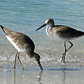 Longboat Key Sandpipers by Barbara Wiley