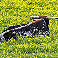 Longhorn Bull by Susan Leggett
