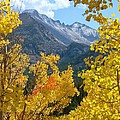 Long's Peak And The Keyboard Of The Winds Amidst Aspen Gold by Margaret Bobb