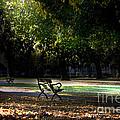 Lonley Park Bench by Brian Roscorla