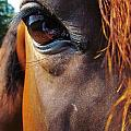 Look Into My Eye by Ginger Adams