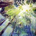 Look Up by Robert Gross