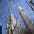 Looking Up Through Trees At Skyscrapers by Axiom Photographic