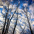 Looking Up When You're Down by Harmonie Sites
