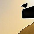 Lookout II by Bill Owen