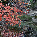 Lost Maples Fall Afternoon by James Woody