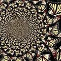 Lotsa Butterflies  by Chris Berry