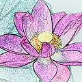 Lotus Flower by Debra     Vatalaro