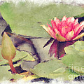 Lotus Flower12 by Donna Bentley