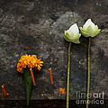 Lotus Flowers On A Thai Shrine by Paul Grand