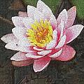 Lotus In The Rain 3 by Cj Carroll