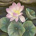 Lotus by Katalin Luczay