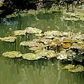 Lotus Pond 2 by Usha Shantharam