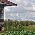 Louisiana Cane by Cheri Randolph