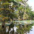 Louisiana by Linda Alexander
