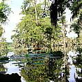 Louisiana Reflections by Linda Alexander