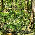 Louisiana Wetland by Anthony Walker Sr