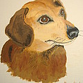 Lovable Dachshund by Norm Starks