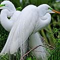 Love Birds by Bill Dodsworth