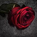 Love Hurts by Claudia Moeckel