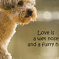 Love Is A Wet Nose And A Furry Hug by Kathy Clark