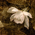 Love Letter Ix Cape Jasmine Gardenia by Jai Johnson