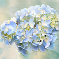 Love Letter Vii Hydrangea by Jai Johnson