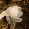Love Letter Viii Cape Jasmine Gardenia by Jai Johnson