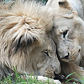 Love Your Mate by Kathy Gibbons