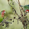 Lovebirds At Play  by Saija  Lehtonen