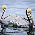 Lovebirds by Richard Yamakawa