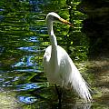 Lovely Bird by Judy Wanamaker