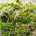 Lovely Green Lichen by Kent Lorentzen