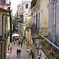 Lovely Havana by Laurel Fredericks